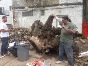 Bronx tree removal services