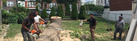 Tree Cutting Removal Services