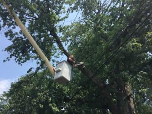 Bronx Tree Service