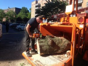 bronx tree services