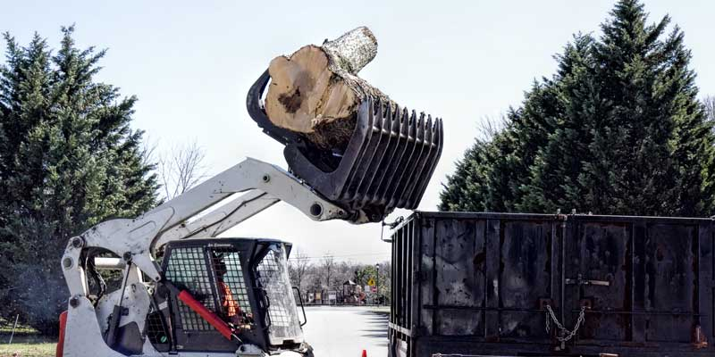 best-tree-removal-bronx-ny