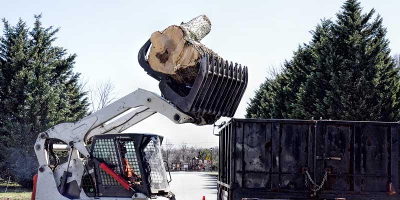 best-tree-removal-bronx-ny