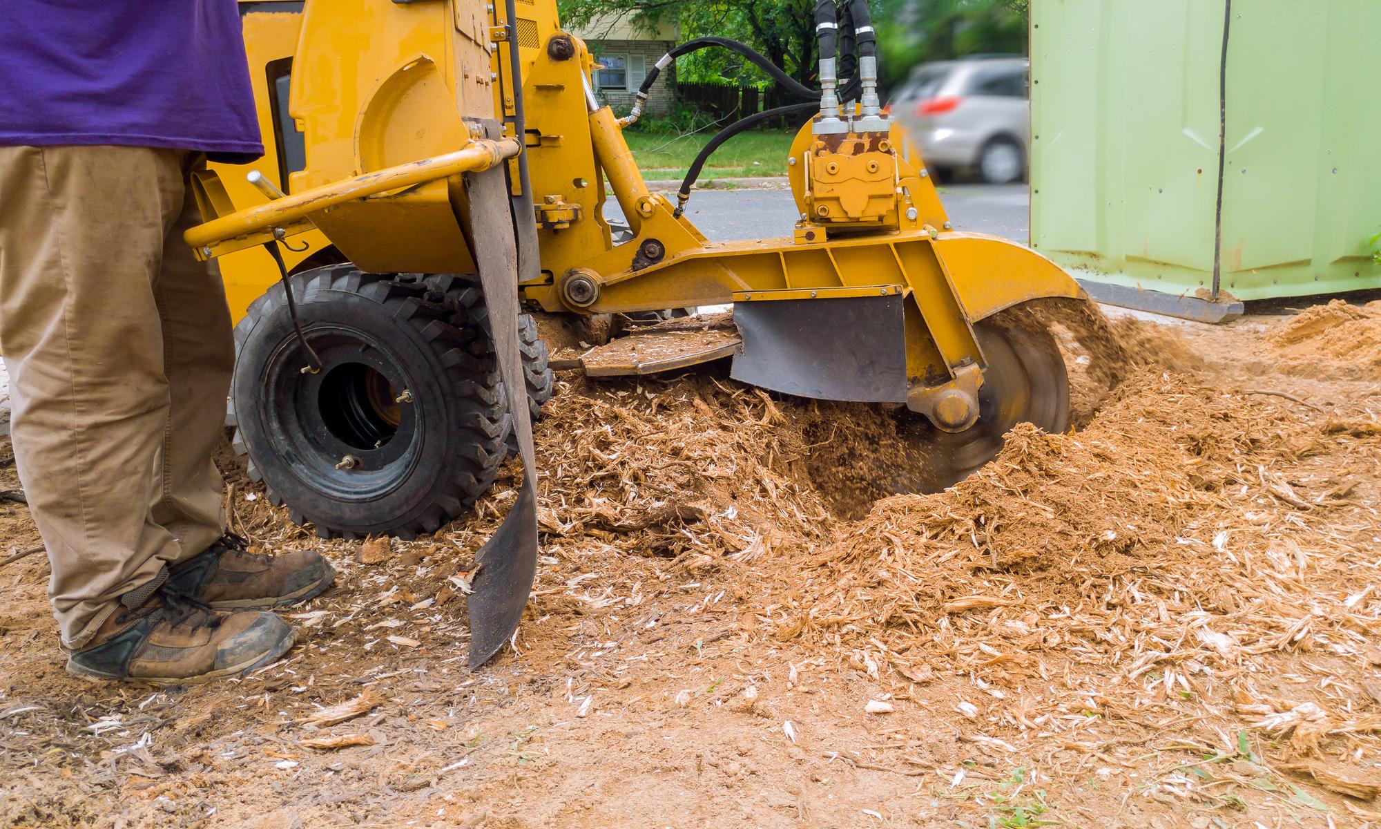 bronx stump removal service